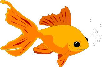 carp gold fish